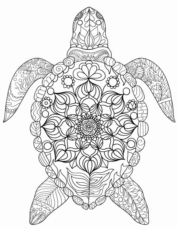 Pin On Coloring Turtle Pages