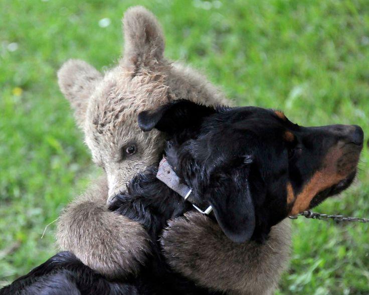 Best 2011 Animal Photos.