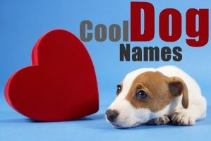 How To Choose Cool Dog Names : http://www.webdogsguide.com/2013/12/Cool-Dog-Names.html