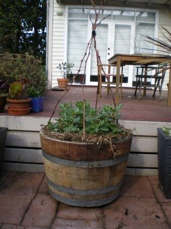 15 best wine barrel garden ideas images on pinterest yard ideas wine barrel gardens workwithnaturefo