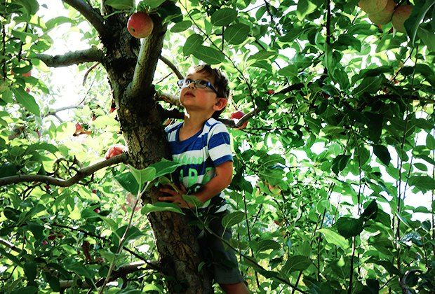 Pick your own apples with the kids an hour (or less) from Midtown Manhattan.