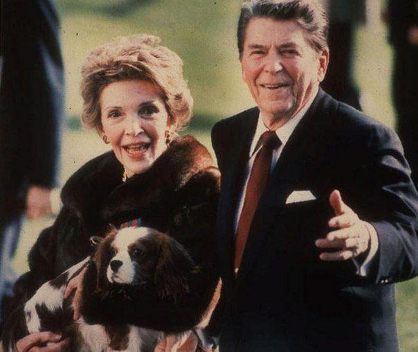 Государственные деятели и их собаки. Супруги Рейган с пёсиком породы кавалер кинг чарльз спаниель. Обаятельный симпатяга стал рождественским подарком для Нэнси Рейган от мужа в 1985 году. До него в белом доме проживал фландрский бувье Лаки, но из-за внушительных размеров его вывезли на калифорнийское ранчо президента.