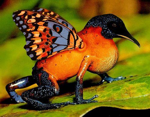 Des animaux hybrides ..