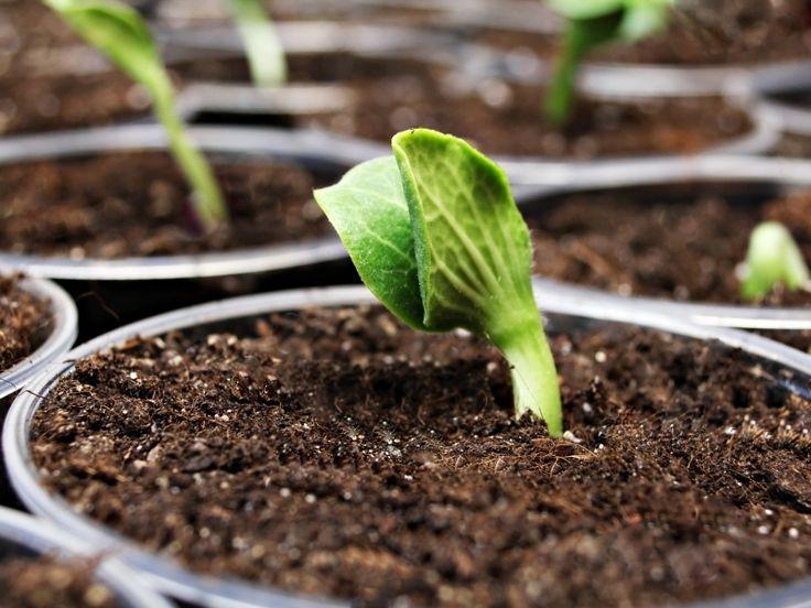 Домашние смеси для ускорения всхожести семян