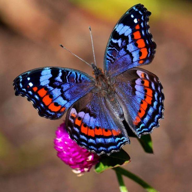 Бабочка смотреть картинки