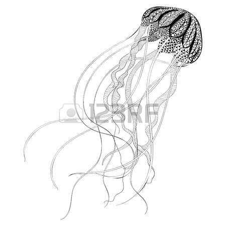Zentangle siyah Denizanası stilize. El Drawn vektör çizim beyaz zemin üzerine izole. dövme ya da makhenda için çizin. Deniz koleksiyonu.