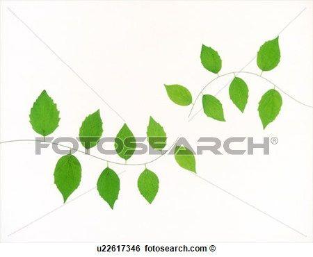 modelos de ramos de folhas - Pesquisa Google