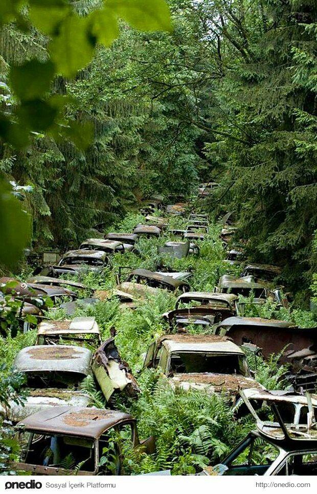 Terkedilmiş araba mezarliği