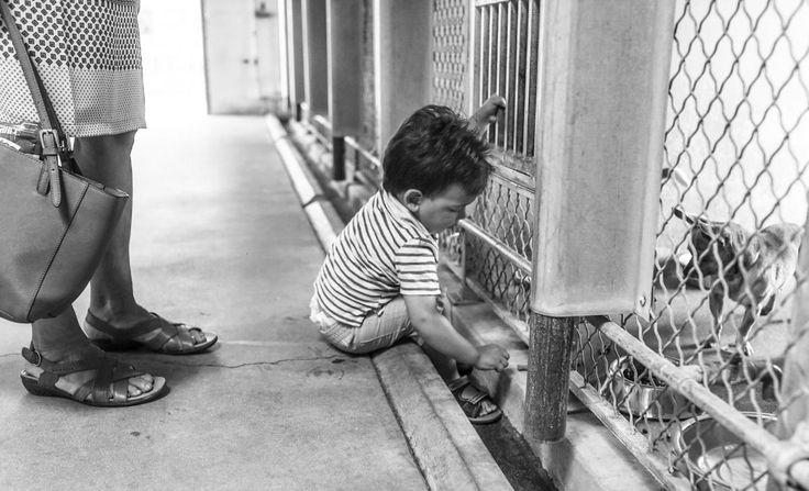 Pequeños grandes voluntarios: los niños que logran cambiar vidas perrunas   SrPerro.com, la guía para animales urbanos.