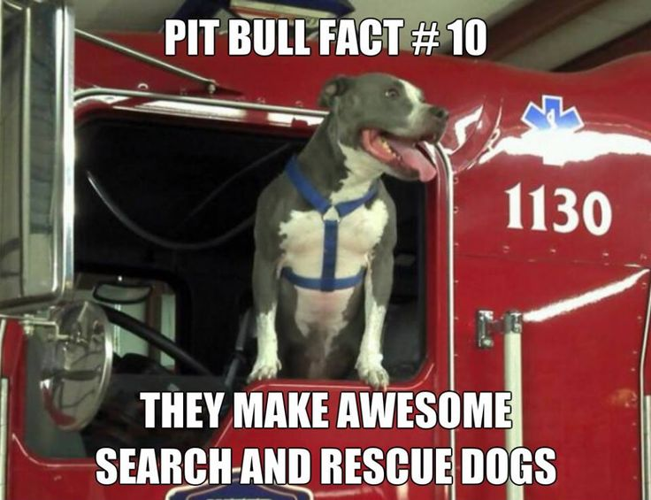 Fact #10 Awesome search and rescue dogs!