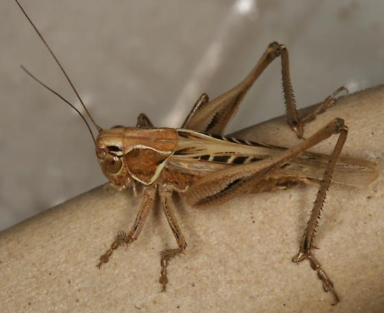 8 Best Hopping Insects Images On Pinterest  Bugs Insects And Magnificent Small Jumping Bugs In Bathroom Review