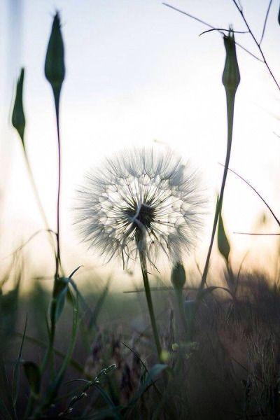 wish weed...