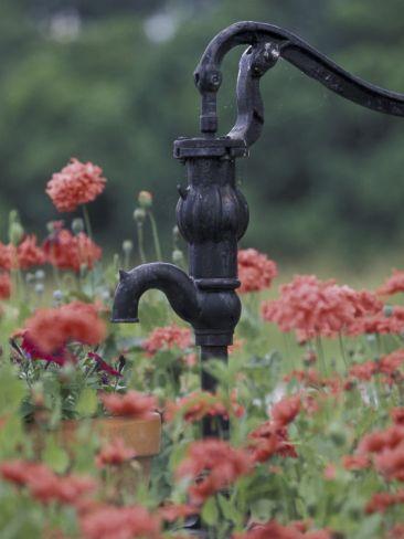 Hand Pump Among Poppies, Bardstown, Kentucky, USA