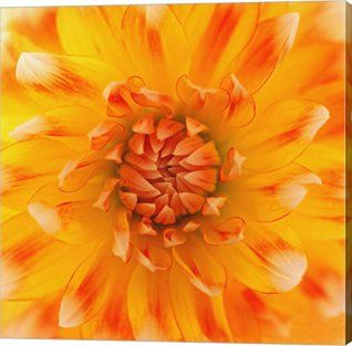 Orange wall art is the perfect type of fall wall art to use  in your home.  In fact fall canvas art is  especially trendy this time of year.   Whether it be an orange wall clock, orange canvas art or even orange  wall hangings you will find something perfect to decorate your home for  #autumn.       Orange Glow by Flowerphotos Canvas Art Wall Picture, Gallery Wrap, 24 x 24 inches