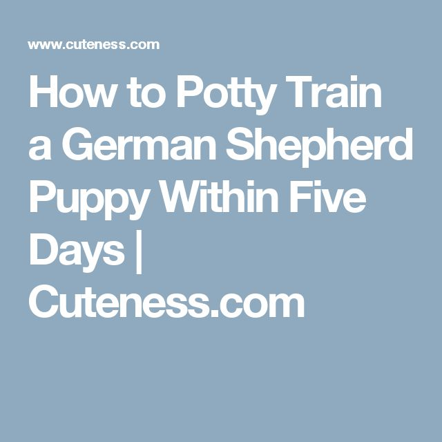 How to Potty Train a German Shepherd Puppy Within Five Days | Cuteness.com
