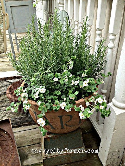Rosemary And Looks Like Bacopa A Pretty Combination For A