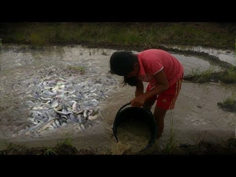 Amazing Fishing in pailin - girl Fishing in  Cambodia -  Beautiful Girl ...