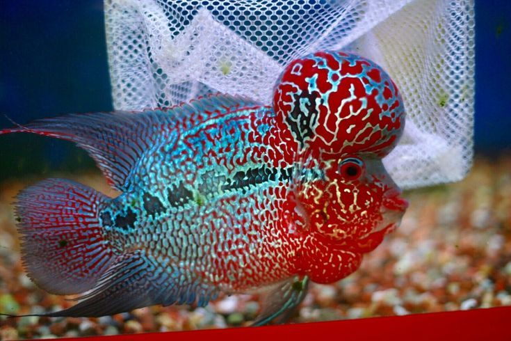 Pin On Aquarienfische