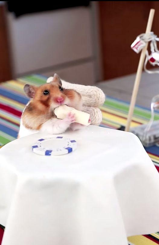 Adorable hamster eats adorable burrito → http://youtu.be/JOCtdw9FG-s