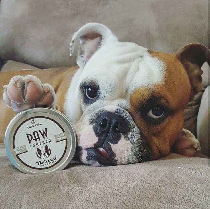 best 25  boxer bulldog ideas on pinterest