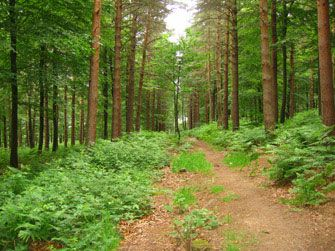 Otley Chevin Forest Park overlooks the nearby market town of Otley. There are woods, heathland and meadows to explore as well great views over the lovely river Wharfe valley.