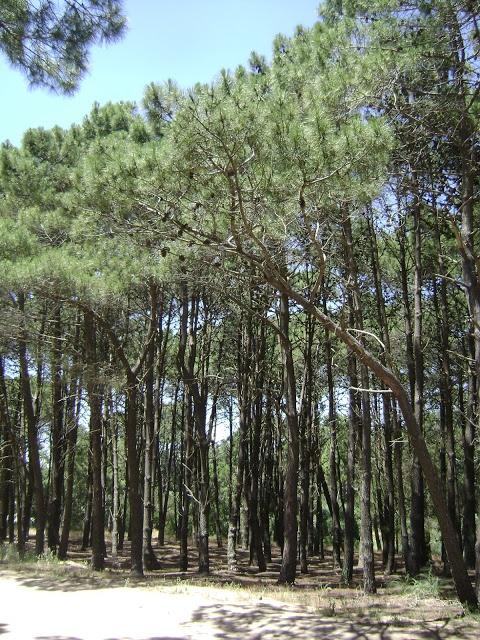 pinar, villa gesell, argentina