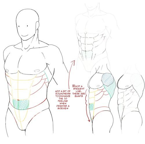 47 best anatomy-torso images on pinterest | anatomy, hot men and, Muscles