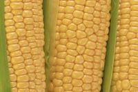 How to Make Corn on the Cob in the Oven | eHow