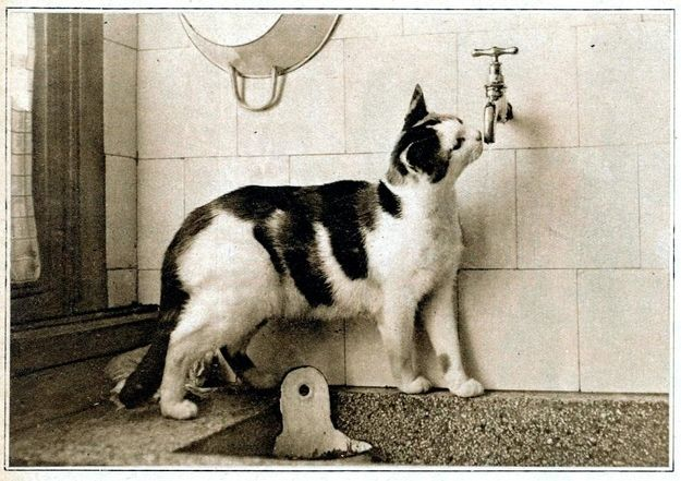 This cat drinking from a faucet, 1932 | 30 Delightful Cat Photos From The '30s