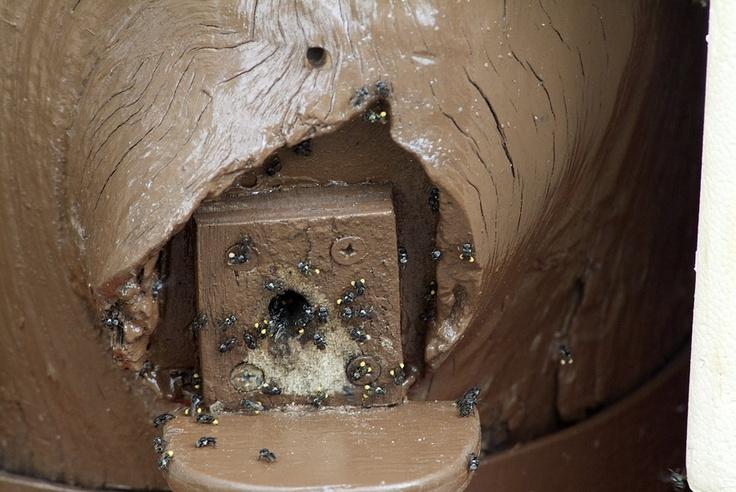 Adrian's hive at North Rocks