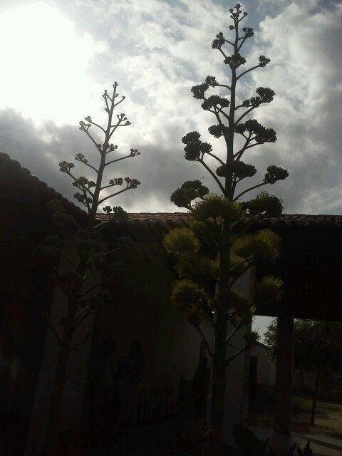 Jardim da escola Liberalina Paes Landim.