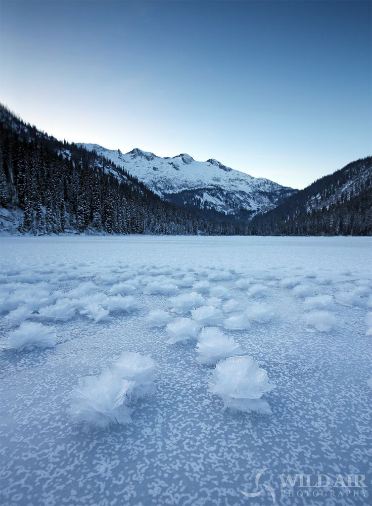 Ice roses on Gibson Lake, Kokanee Glacier Park