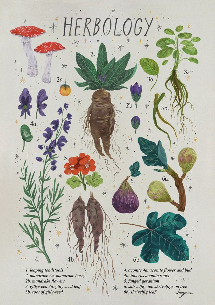 Harry Potter Art Image By Accio This On Herbology Harry Potter