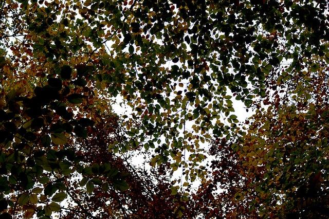 Automne en Limousin, c'est pas forcement des couleurs chaudes, ni une lumière tranchée... c'est du gris, de l'ombre et des couleurs...