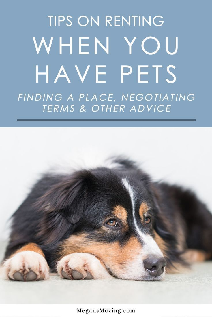 Tips On Renting A New Place When You Have Pets Megan S Moving Apartment Pet Pets Dog Training