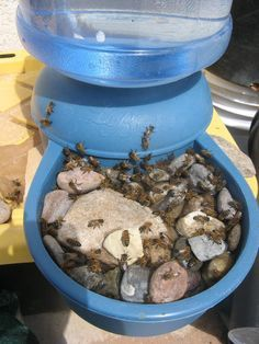 Water for your bees – Albuquerque Beekeepers / Make sure to scatter rocks in bottom to prevent drowning.   Best to keep water in the shade.