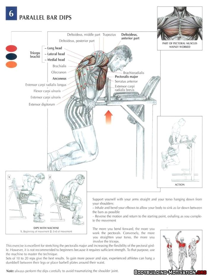 Chest Muscle Anatomy Exercises - anatomy chart chest workout
