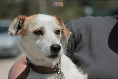 Já conhece a campanha Alimente Um Animal com o OLX?  Visite o site do OLX e participe nesta campanha!