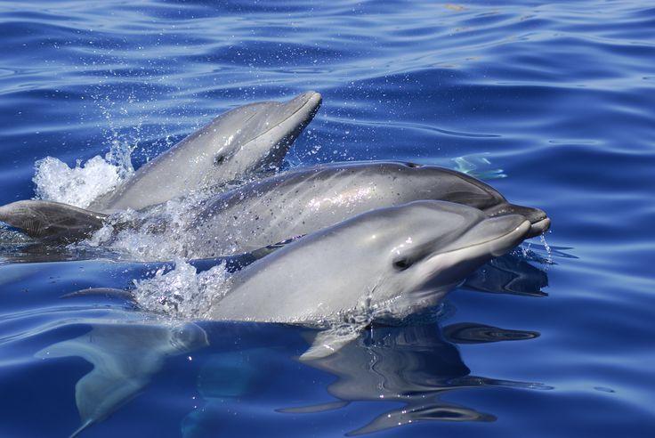 Avistamiento de ceátaceos; delfines y ballenas en Tenerife, Islas Canarias // Whale and dolphin watching in Tenerife, Canary Islands // Wal- und Delfinbeobachtung in Teneriffa, Kanaren, Kanarische Inseln #visitTenerife