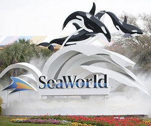 Did you know that at Sea World Orlando you can feed the animals. This is great adventure and one you don't want to miss when you visit Sea World.