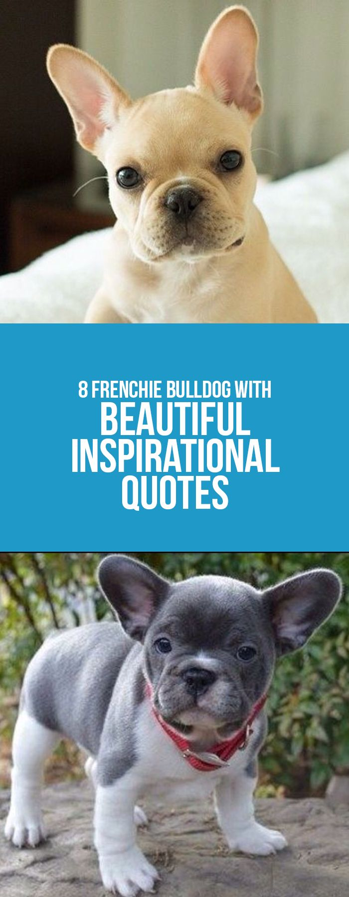 Bulldog Quotes 21 Best Frenchies And Quotes Images On Pinterest  Cubs French