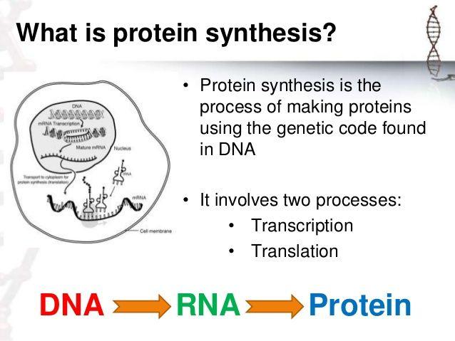 Biology: Lost in Translation: central, dna, dogma, en, én, Én, genetics, protein, prótein, rna   Glogster EDU - Interactive multimedia posters