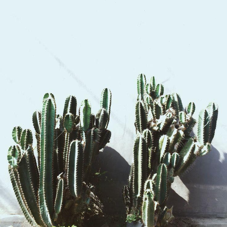 cactus, bali.