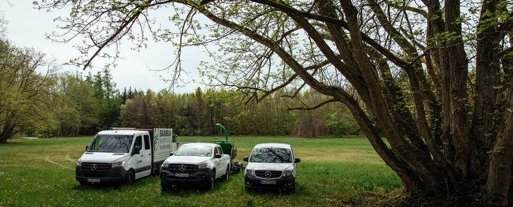 Mit drei Mercedes Transportern pflegt Baumbua Reich mit Team in und um München Bäume fachgerecht