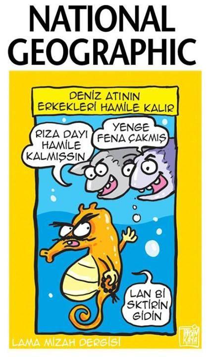 Deniz atlarının erkekleri hamile kalır. karikatür