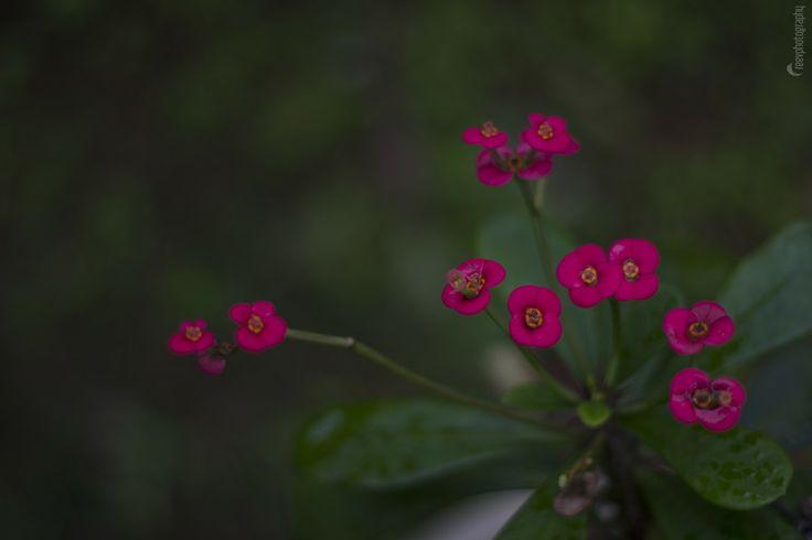 """Garden flower"" Kerala by Ranjith Thekkoottu on 500px"