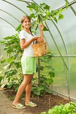 15 Ultimate Tips on Growing Plants in a Greenhouse Year Round