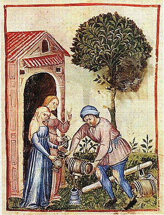 olio d'oliva - from theTacuinum Sanitatis of Paris,  late 14th century: XXV. Olive Oil (Oleum Oliue).  The Tacuinum Sanitatis were illuminated medical manuals based on texts translated from Arabic into Latin.