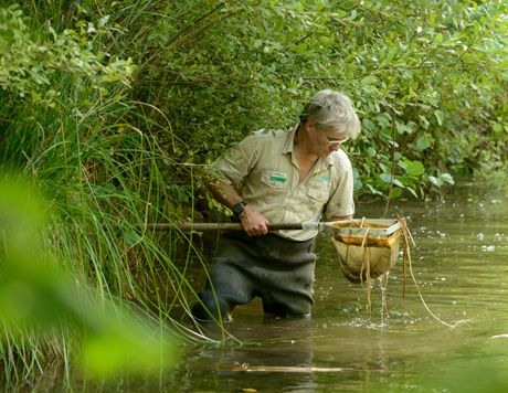 Venture out with Martin the #ForestRanger at Deerpark #Cornwall This activity is Pond Dipping: Amazing Animals! What's Onsite at Deerpark - Forest Holidays #ForestRetreat #UKgetaway