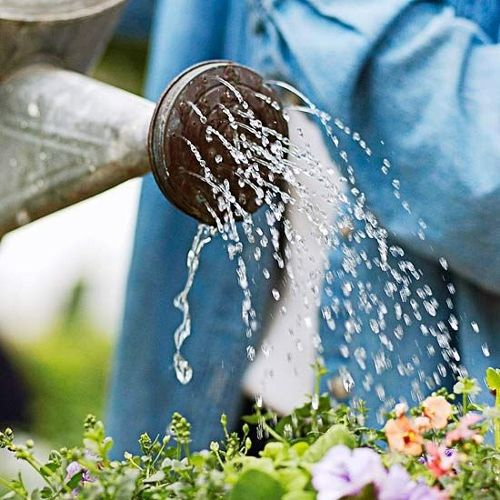 With any garden, you will want to water them on a regular basis